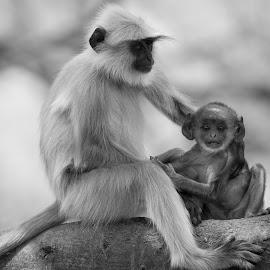Mama's boy by Saumitra Shukla - Black & White Animals ( monkey, black, sadness, babies, emotion, white, contrast, baby, animal, black and white, travel, wild, langur, kids, wildlife )