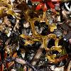 Cetraria Lichen
