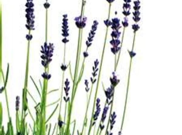 Lavender Bath Recipe