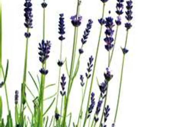 Lavender Bath Recipe