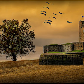 homeward bound by Stephen Hooton - Landscapes Prairies, Meadows & Fields ( countryside, scotland, tree, sunset, castle, birds )