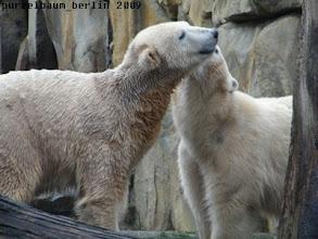 Photo: Morgenbussi fuer Knut von Gianna :-)