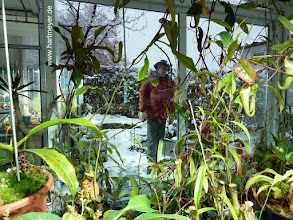 Photo: Nepenthes im Winter