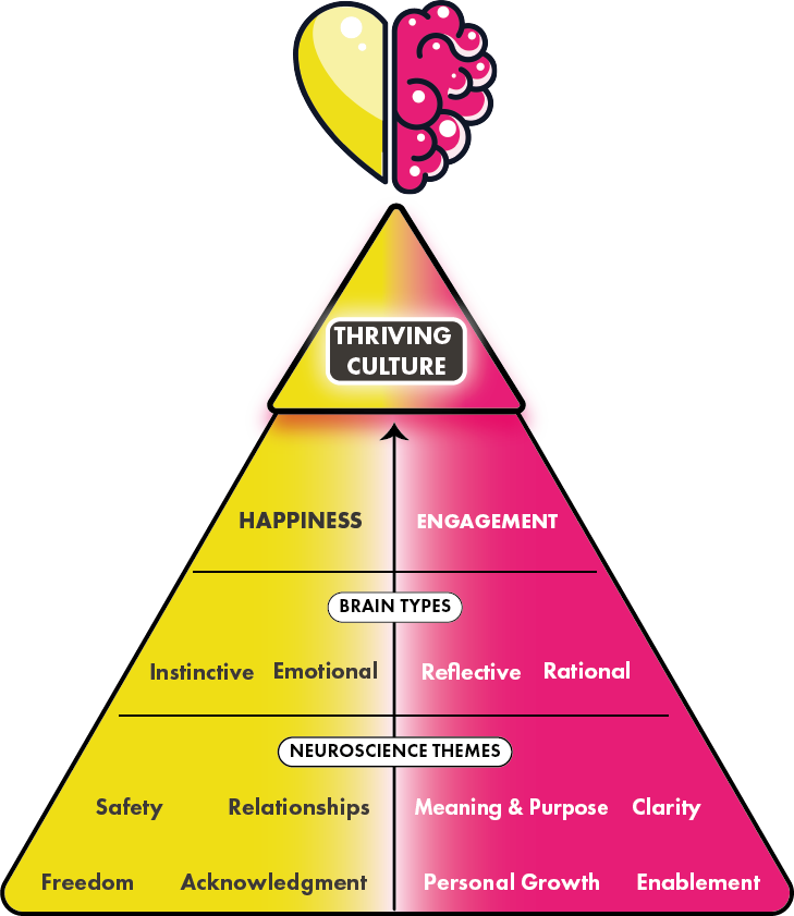 The Thriving Culture pyramid shows neuroscience themes feeding into brain types feeding into happiness and engagement which builds to create thriving culture.