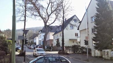 Photo: Eine ,Kolonie' am Goldberg.