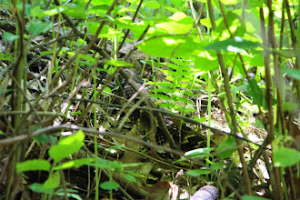 """Photo: Snakes are so well camouflaged they """"disappear"""" into the forest floor -- Can you see it?"""