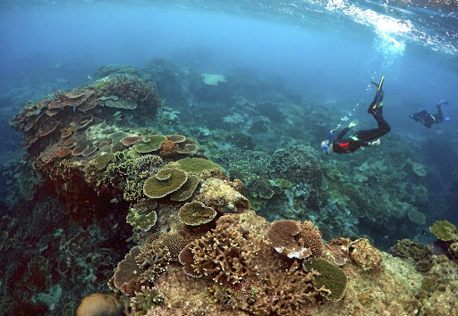 Rangers inspect the Coral Gardens section of the Great Barrier Reef at Lady Elliot Island, 80km northeast of Bundaberg in Queensland, Australia. Picture: REUTERS