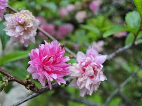 Photo: 花6。