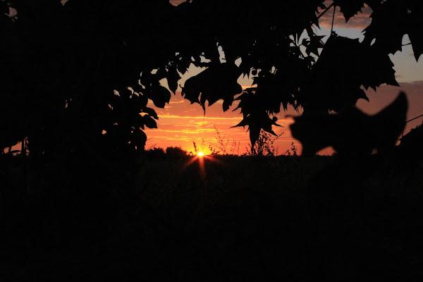 l'occhio del sole di Miriam G.