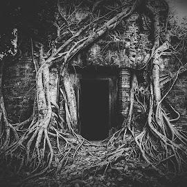 Dark Root by Jimmy Kohar - Black & White Flowers & Plants (  )