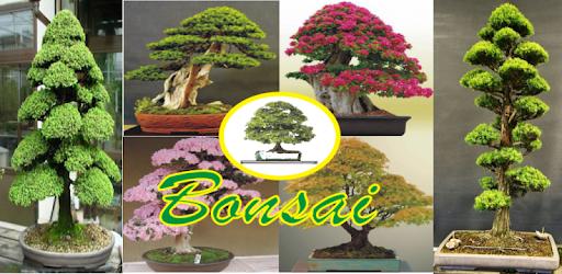 Приложения в Google Play – <b>Decorative</b> Plants Bonsai