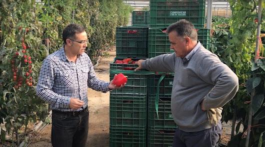 Ecoculture adelanta y mejora la coloración y el brillo en cultivos