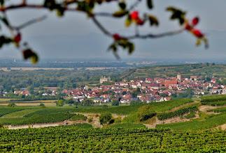 Photo: Blick vom Schlossberg bei Achkarren auf Burkheim am Fuß des Kaiserstuhls. Im Westen die Niederung des Oberrheingrabens und dahinter - schwach im Dunst zu erkennen - die Vogesen.
