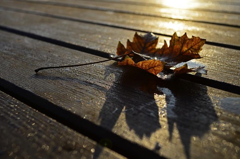 Autumn dream... di Licia Piazza