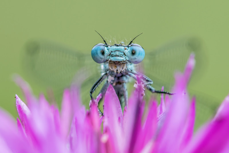Occhi blu di Massimo_Tamajo