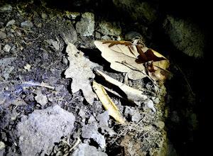 Photo: Gyökérzóna és egyebek a Szentendrei-barlangban.