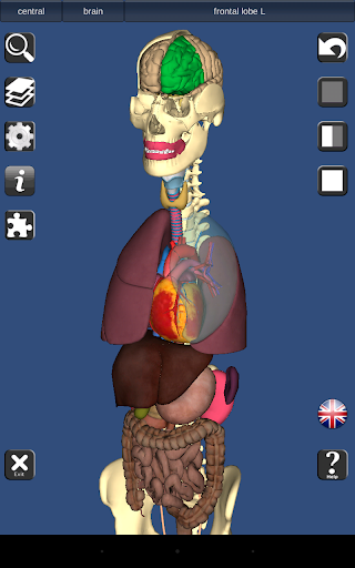 3D Bones and Organs (Anatomy) 3.1.0 screenshots 10