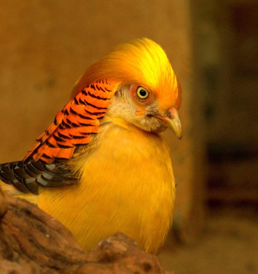 The Golden Bird by Abhishek Majumdar - Animals Birds
