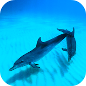 Wild Dolphins Video Wallpaper