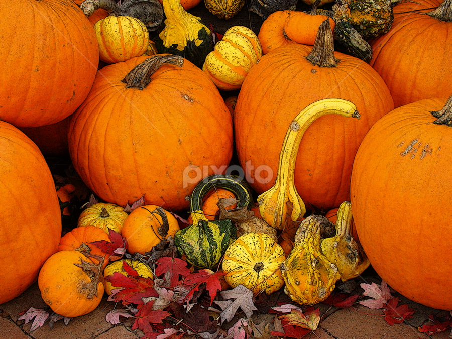 Autumn Harvest 5 by Rodney Williams - Public Holidays Thanksgiving ( abstract, editorial, vintage, still life, fine art, scenic, transportation, travel, entertainment, pumpkin patch, nature, seasons, pumpkin close up, landscapes )
