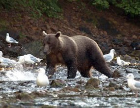 Photo: Fishing Bear