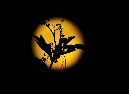 The Magic of the Moon  di Eleonora_Mos