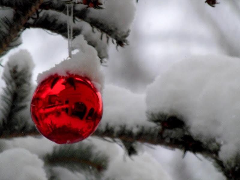 Bianco e rosso di supergigi