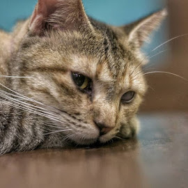 by Rajesh Srinivasan - Animals - Cats Kittens