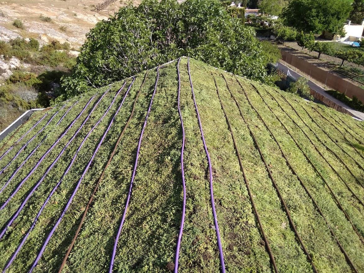 Riego en cubiertas vegetales activas
