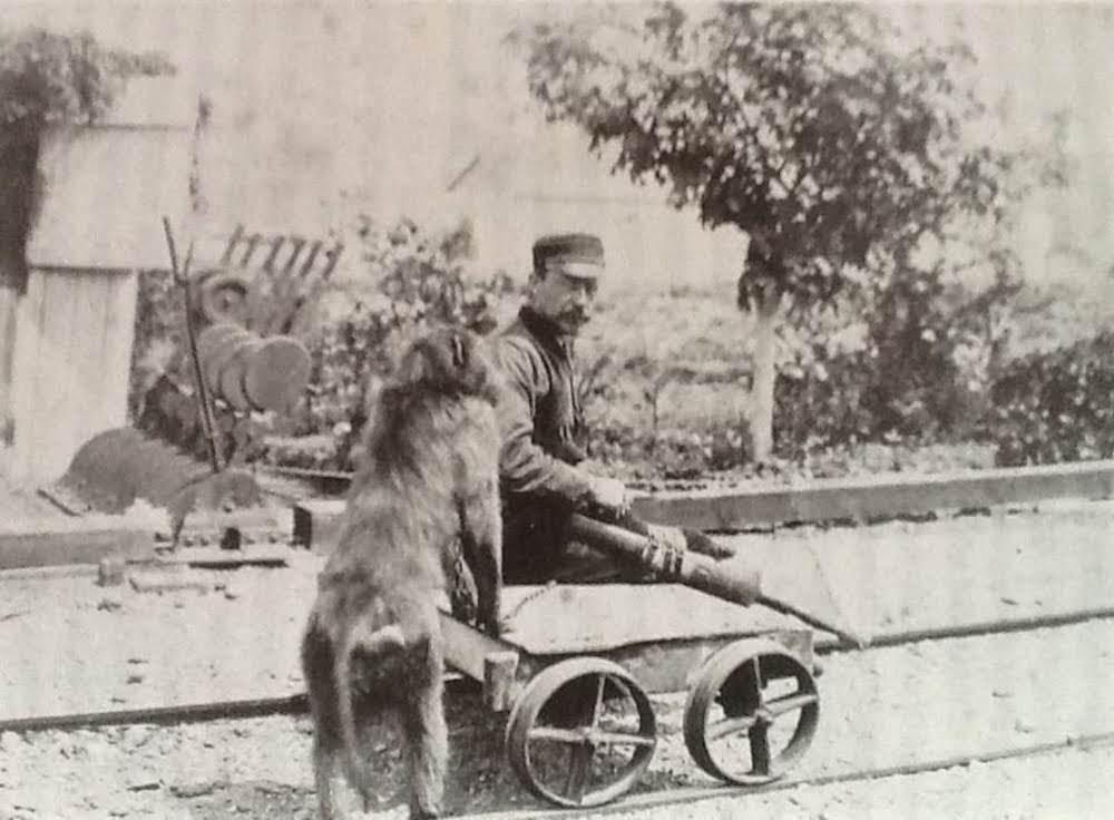 Jack, o babuíno sinaleiro