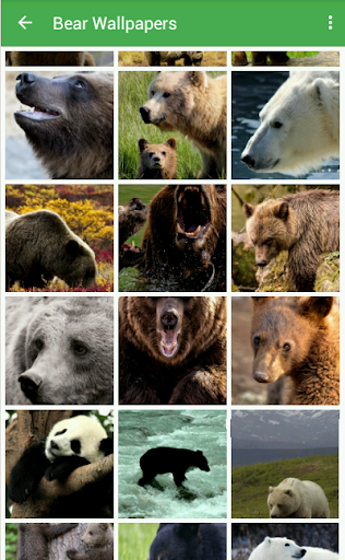 Bear Wallpapers