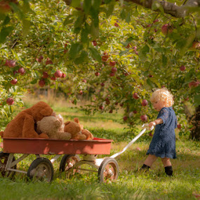 Picking Apples with Teddy by Chris Cavallo - Babies & Children Children Candids ( maine, toddler, wagon, girl toddler, apples, two, apple tree,  )