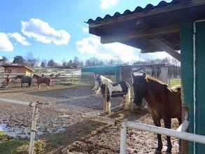 Photo: Manche Pferde scheinen froh, dass sie 'wer anspricht.
