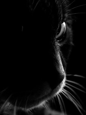 Eyes of a tiger di ugofeca