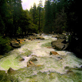 Yosemite by Shanna Twomey - Nature Up Close Water ( water, yosemite, green, river )
