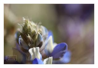 Photo: Eastern Sierras-20120717-668