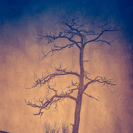 Lone Tree - 2 by Garry Dosa - Nature Up Close Trees & Bushes ( b&w, dawn, tree, blue, black & white, artistic, surreal )