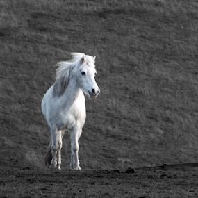Outstanding by Stephen McKibbin - Animals Horses ( horse )