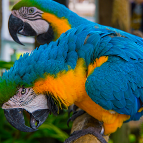 Now that's funny by Charles Adam - Animals Birds ( colour, bird, color, colors, tropical, beak, feathers, birds, macaw )