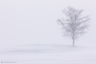 Photo: My favorite tree in Biei - this was shot in a driving snow storm with a 300mm F2.8 lens.