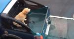 妄顧狗狗安全 原來車主是成龍