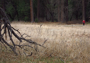 Photo: Other end of Cook's Meadow. #3764, Day 3. Ely providing Kodak color
