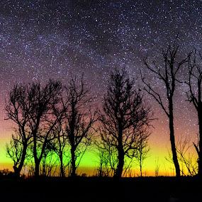 Aurora Borealis  by Kristian Pikner - Landscapes Starscapes ( lights, northern, estonia, sky, nature, stars, green, aurora, landscape,  )