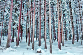Photo: Winter Norwegian Wood  Good morning, I will go to university now, have a nice day!  雪の積もったノルウェーの森