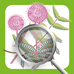 Invasive Species ID Guide Icon