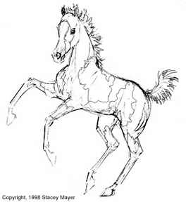 Gypsy Horse Coloring Pages Coloring Pages
