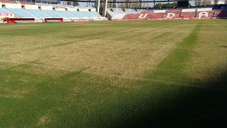 Así está la hierba este domingo.