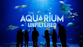 The Aquarium: Unfiltered thumbnail