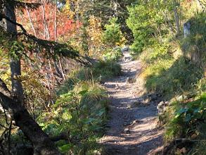 Photo: las  z tajemniczą ścieżką .........