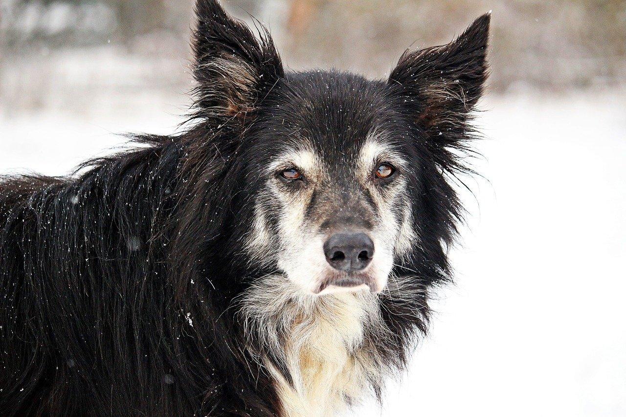 mon chien vieillit,vieux chien,chien vieillissant,mon chien vieillit mal,mon chien vieillit et maigrit,votre chien vieillit,un chien qui vieillit